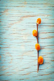 Pussy willow with an orange color on a turquoise wood surface Royalty Free Stock Photos