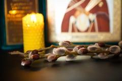 Pussy willow Sunday symbols. Of Orthodoxy, Christianity Royalty Free Stock Photos