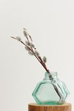 Pussy willow twigs in green glass jar vase on white background Stock Photos