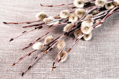 Pussy-willow twigs. For holiday Sunday in Russia on bagging material royalty free stock images