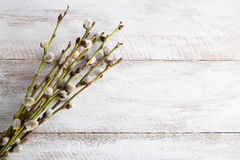 Pussy willow twigs on wooden table Royalty Free Stock Images
