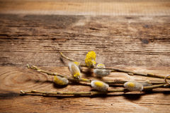 Pussy willow on wooden background Royalty Free Stock Photography