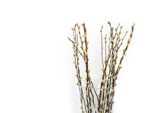 Pussy willows. Branches ina glass vase over white background (Salix caprea Royalty Free Stock Photos