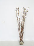 Pussy willows vase Royalty Free Stock Photography