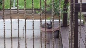 Pussycat σε ένα δοχείο Στοκ εικόνες με δικαίωμα ελεύθερης χρήσης