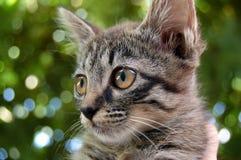 pussycat Стоковое Фото
