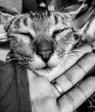 pussycat royalty-vrije stock foto