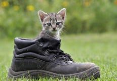 pussycat Стоковое Изображение RF