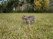 pussycat Стоковые Фото