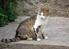 pussycat Stock Foto