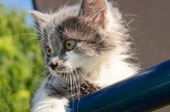 pussycat stock foto's