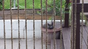 Pussycat in einem Topf Lizenzfreie Stockbilder