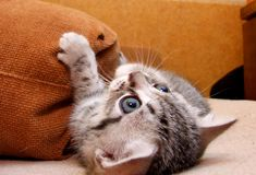 Pussycat Stock Photography