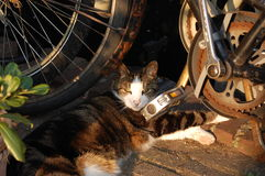 Pussycat under a bike. Pussycat in the sunlight under a bike royalty free stock photos