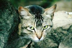 Pussycats spojrzenia Zdjęcia Royalty Free