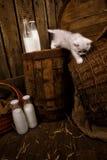 Pussykatten med mjölkar Royaltyfri Bild