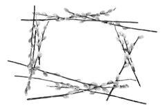 pussywillow ramowy zaokrąglone Obrazy Stock