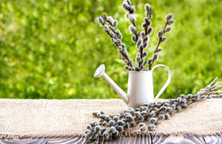Pussywillow and watering can on a wooden board Royalty Free Stock Image