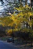 Pusta ławka i lampa obok drzewa z żółtymi liśćmi Fotografia Stock