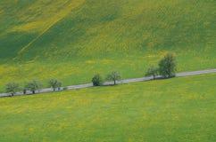 Pusta asfaltowa wsi droga przez łąki z żółtym kwiatem Fotografia Royalty Free