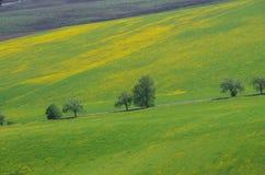 Pusta asfaltowa wsi droga przez łąki z żółtym kwiatem Obrazy Royalty Free