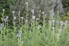 Pusta blommaväxtvildmarken royaltyfria bilder