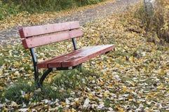 Pusta czerwona ławka w jesieni Zdjęcie Stock