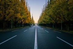 Pusta droga w mieście z drzewami w autum obraz royalty free