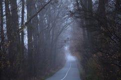 Pusta droga w ranku omijaniu przez lasu zakrywaj?cego w mgle lub mgle zdjęcie stock