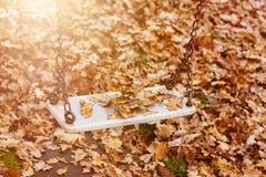 Pusta huśtawka z liśćmi w jesień sezonie Obraz Royalty Free