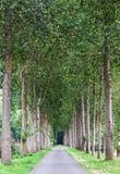 Pusta wiejska droga wykładająca zieloną drzewną aleją zdjęcie stock