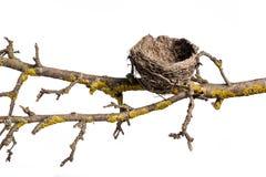 puste gniazdo ptaka Zdjęcia Stock