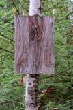 Puste miejsce znak na białej brzozy drzewie Obrazy Royalty Free