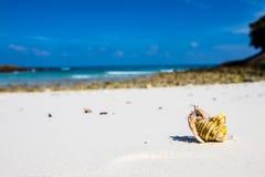 pustelnik ogniska pryszczycy kraba, niderlandy Zdjęcie Stock