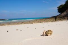pustelnik ogniska pryszczycy kraba, niderlandy Zdjęcia Stock