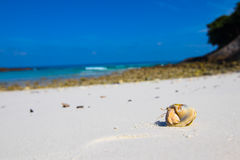 pustelnik ogniska pryszczycy kraba, niderlandy Zdjęcia Royalty Free