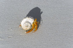 pustelnik ziemi kraba Zdjęcie Royalty Free