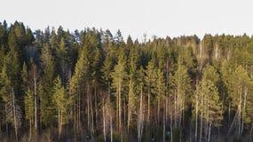 Pustkowi lasowi drzewa w pogodnym wiosna dniu kształtują teren widok zdjęcia royalty free