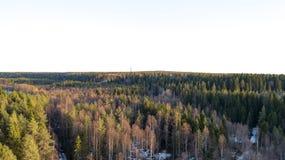 Pustkowi lasowi drzewa w pogodnym wiosna dniu kszta?tuj? teren widok obrazy royalty free