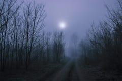 Pustkowia przy aksamitną mgłą Fotografia Stock