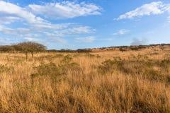 Pustkowie trawy drzew Afrykański krajobraz Zdjęcia Royalty Free