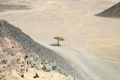 pustne drzewo Zdjęcia Royalty Free