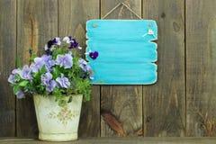 Pusty antykwarski błękita znak garnkiem purpury kwitnie (pansies) Zdjęcia Royalty Free
