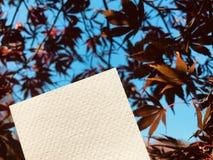 Pusty biały papier z pięknymi czerwonymi liśćmi klonowymi Zdjęcia Stock