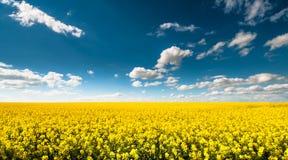 Pusty canola pole z chmurnym niebem Obrazy Stock