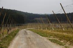 Pusty chmielu pole w Bavaria, 2015 Zdjęcie Stock