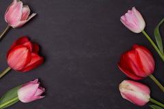 Pusty czysty czarny chalkboard z różowymi i czerwonymi tulipanami fotografia royalty free