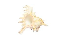Pusty piękny seashell na białym tle Zdjęcia Stock