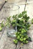 Pusty piwny szkło z gałąź podskakuje na drewnianej teksturze zdjęcie royalty free