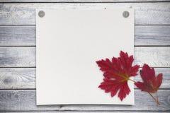 Pusty prześcieradło papier i czerwień opuszcza na drewnianym tle Fotografia Stock